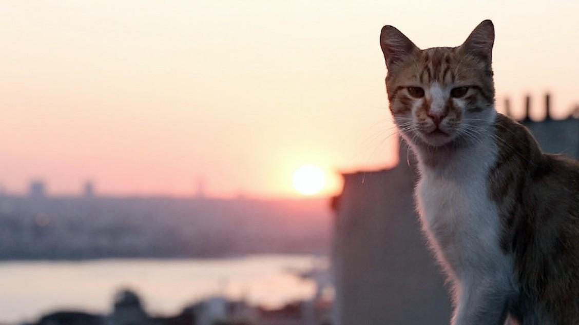 kedi katt foto fra filmen